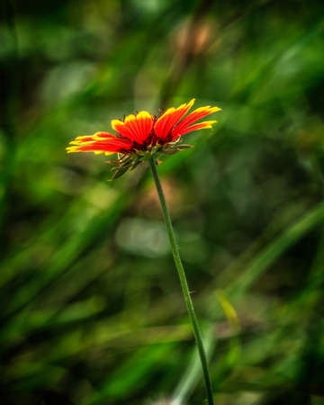 Aug. 26, 2016 - Spring TX  -  This is a weed that is flowering by a pond.  Took with a 200mm (400mm FF) Olympus 50-200mm lens hand held.