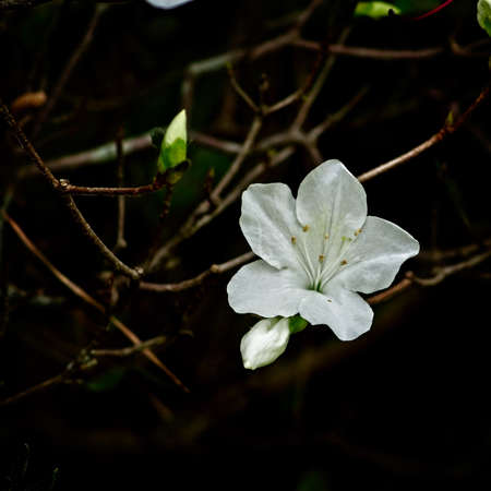 Spring TX USA - Flower in a tree Stock Photo