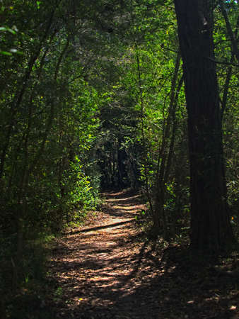 The Woodlands TX USA - 02-28-2020  -  Trail in Woods with Green Trees Stock fotó