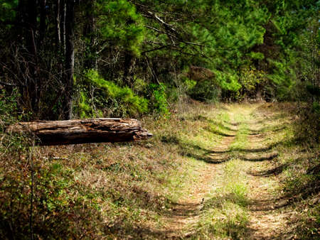 The Woodlands TX USA - 02-07-2020  -  Trail and Dead Log in the Woods Stock fotó