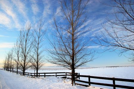 A row of trees and a fence in sunny winter.