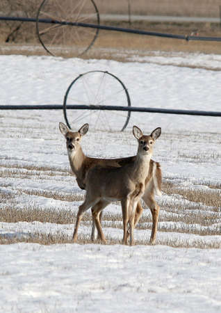 deer stand: Deer stand in the field. Stock Photo
