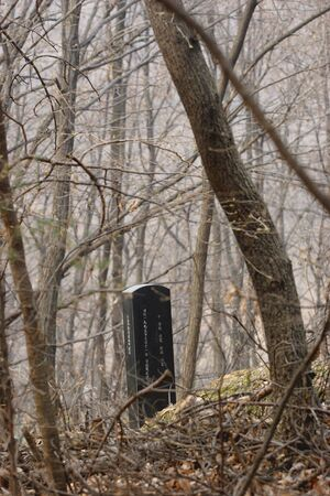 A lone tombstone within the barren trees. 版權商用圖片