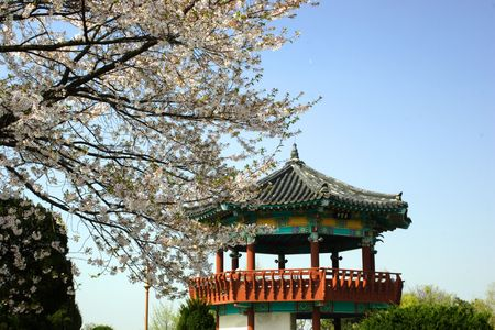A Korean pavilion behind a blossoming tree.
