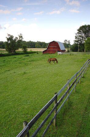 A horse grazes in a barnyard. Stok Fotoğraf