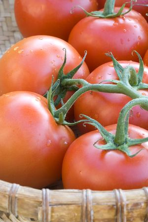 A close up of tomatoes on a vine in a basket. photo
