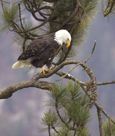 An alert eagle is perched on a branch.