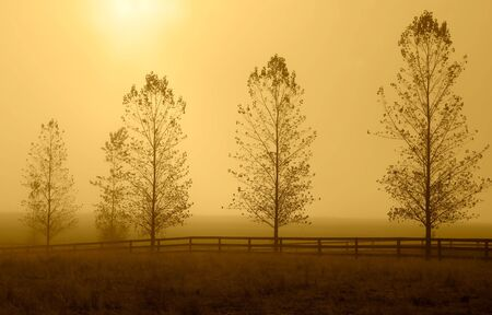 A row of trees lined up during the morning haze that casts a yellowish hue. photo