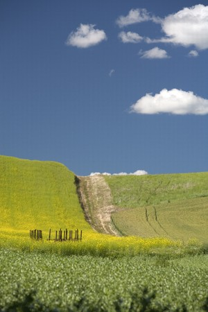 A bright sunny day in the palouse farm region near Steptoe, Washington. Stock Photo - 7420307