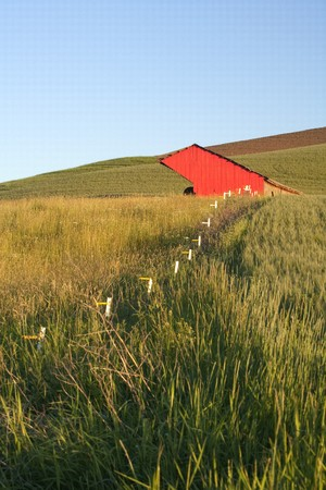 A wire fence leads to a red barn in a green field. Palouse region of Washington. Stock Photo - 7420310