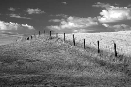 A B&W of a fence row in a farm field. Stock Photo - 7748790