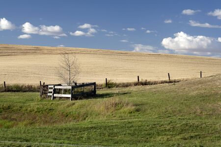 A small tree sits in a pasture surrounded by wide open farm farmland. Stock Photo - 7748777