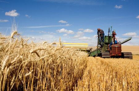 cosechadora: Cosecha de trigo utilizando que un viejo combina ser tirado por un tractor en el Colfax, Washington abeja trillar el 6 de septiembre de 2010.  Editorial