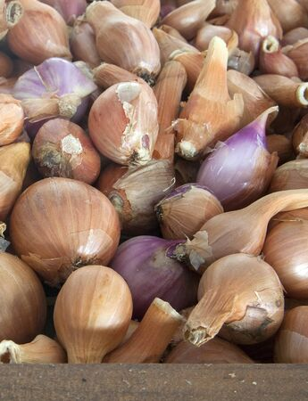 A close up of small shallots on display for sale.
