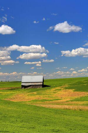 An old barn sits in a farm field in the palouse region of eastern Washington. Stock Photo - 8054528