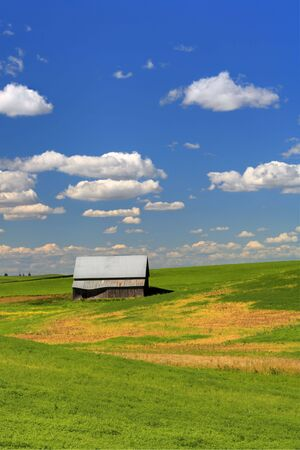 palouse: An old barn sits in a farm field in the palouse region of eastern Washington.