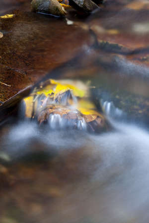 Yellow fallen leaves in a fast moving mountain stream. photo