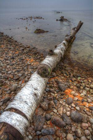 falling tide: A fallen aspen tree lies by the shoreline of a lake.