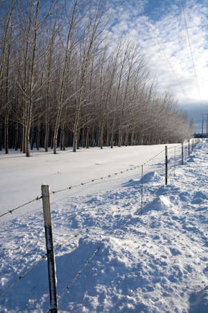 A sunny winters scenic in rural northern Idaho. photo