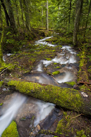 A swift flowing mountain stream winding through the forest.