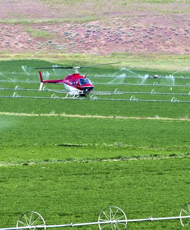 dusting: Crop dusting helicopter. .
