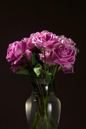 vase: Low key rose portraiture.