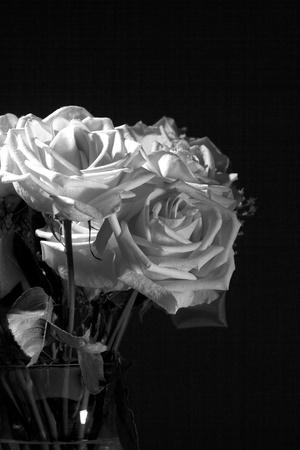 Image en noir et blanc d'un vase de roses sur un fond noir. Banque d'images - 9753590