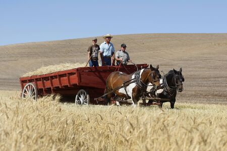 Old fashioned threshing bee in Colfax, Washington on September 5, 2011.