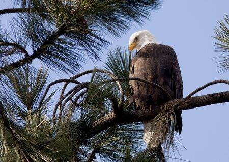 Eagle on a branch. photo