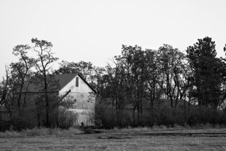 barn black and white: A black and white image of an barn by a field.