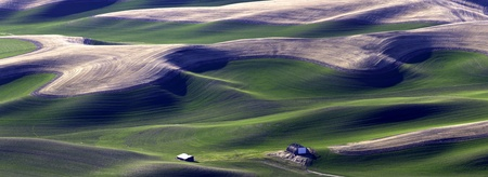 A panoramic image of the green of the Palouse region in eastern Washington
