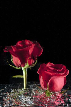stirred: Roses in stirred water