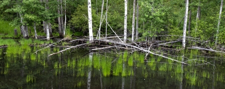 alene: A panoramic view of a lush marsh area near Coeur d