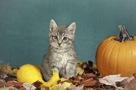 Halloween kitten  photo