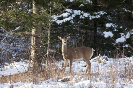 Deer by a tree  Stock Photo - 17210958