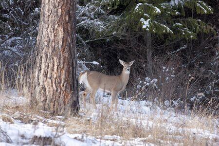 Deer stands near tree Stock Photo - 17210957