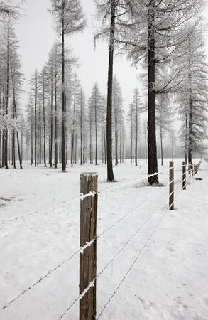 Frost on fence and trees near Oldtown, Idaho  photo