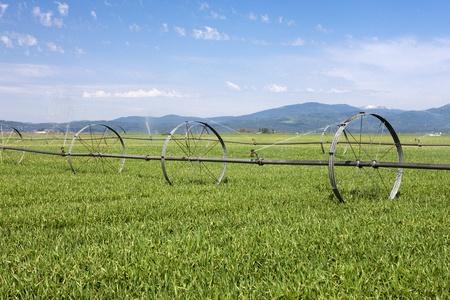 Irrigating the farm field