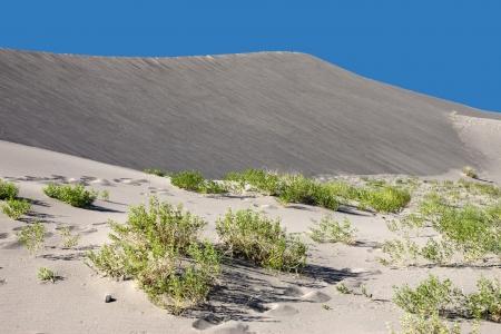 plantas del desierto: Las plantas del desierto cubren la arena Foto de archivo