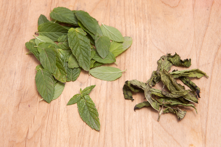 Fresh and dried peppermint leaves