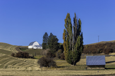 palouse: Barn on hill in the Palouse  Stock Photo