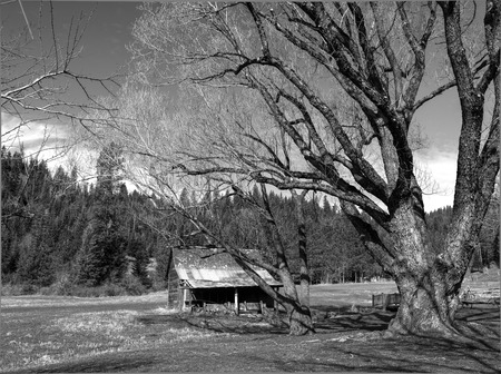 b w: B W of small barn and trees  Stock Photo