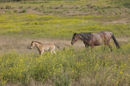 spunky: Horse behind its pony