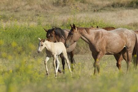 spunky: Encouraging the pony