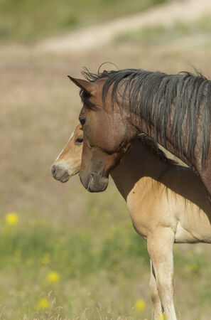 spunky: Tender moment with its pony