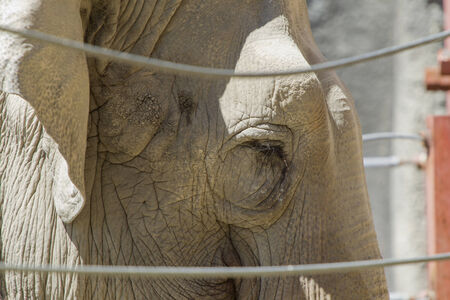 defiance: Close up of elephant at the Point Defiance Zoo in Tacoma, Washington