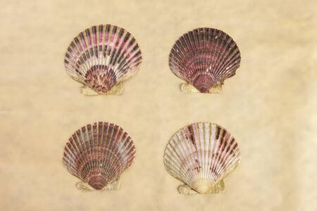 fan shaped: Four scallop shells.