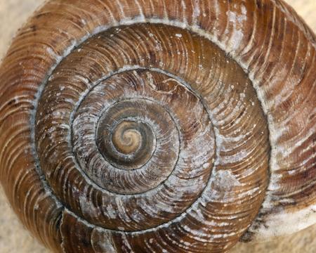달팽이 껍질 닫습니다.