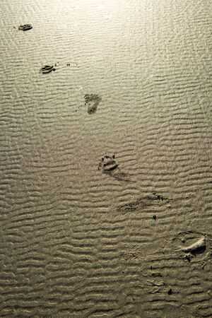footprints in the sand: Footprints in the sand.
