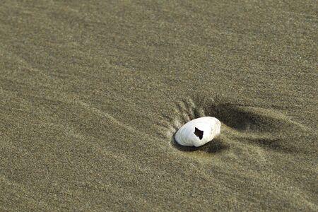 providing: A seashell lays in the sand providing a contrast. Stock Photo